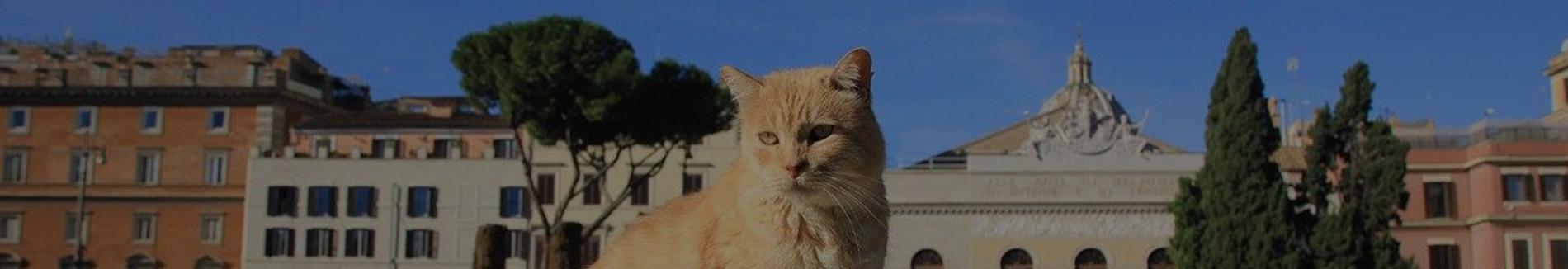 Roma cats
